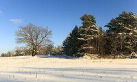 Vd:n för Stenwalls Trä har avlidit