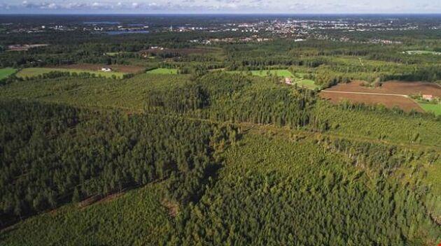 Växjö Hollstorp som nu säljs av Sveaskog uppgår till 163 hektar.