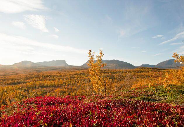 Abisko nationalpark ligger i Kiruna kommun och bjuder på storslagna fjällandskap.