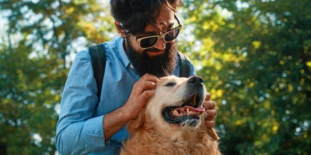 Skäggiga män bär på större bakteriehärd än hundar