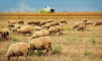 Gård med 200 000 hektar mark till salu
