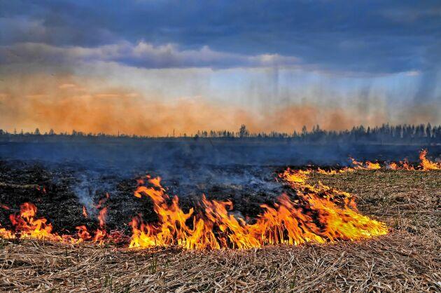 Att bränna torrt vårgräs är riskabelt. Tänk efter noga, är det verkligen nödvändigt?