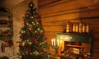 Finare julgranar efter torrsommaren