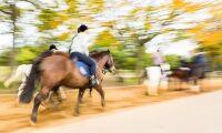 Hästföretagare stoppas från att driva ridskola