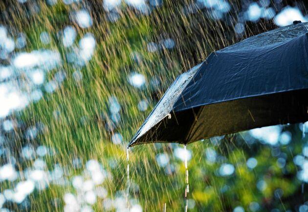 Inledningen av veckan domineras av regn.