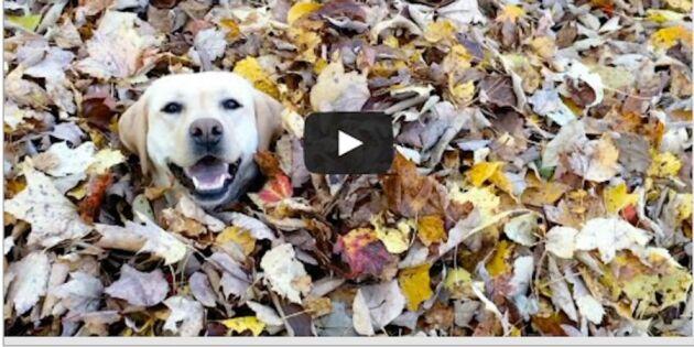 Höstens gladaste hund - kolla det galna klippet!