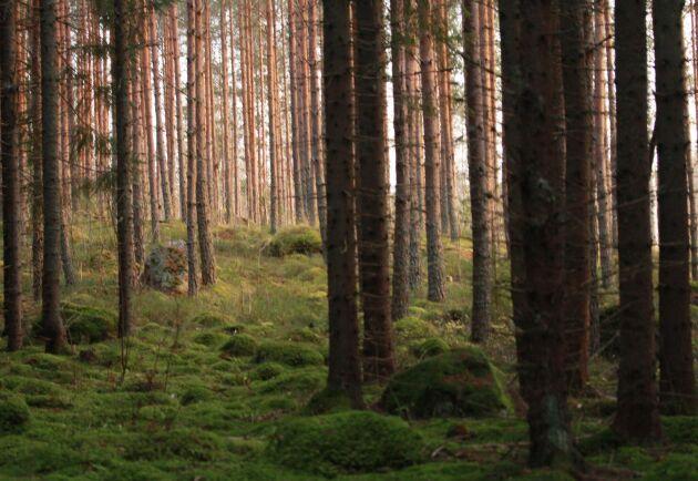 Det blir ingen landsomfattande inventering av svensk skogsmark.
