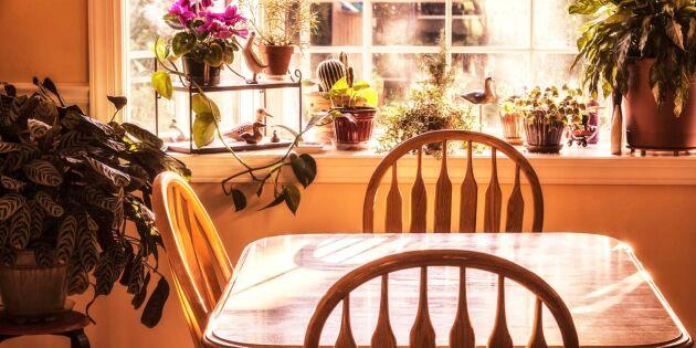 Så skapar du en fin fönsterbräda med växter