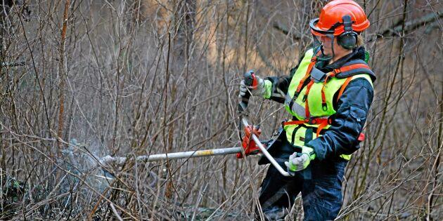 Stort varsel på Skogsstyrelsen