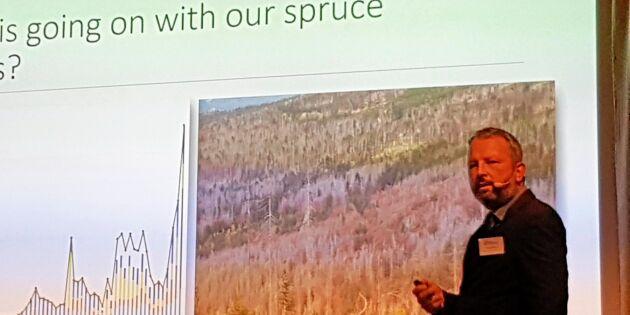 I Tjeckien avverkas bara död skog
