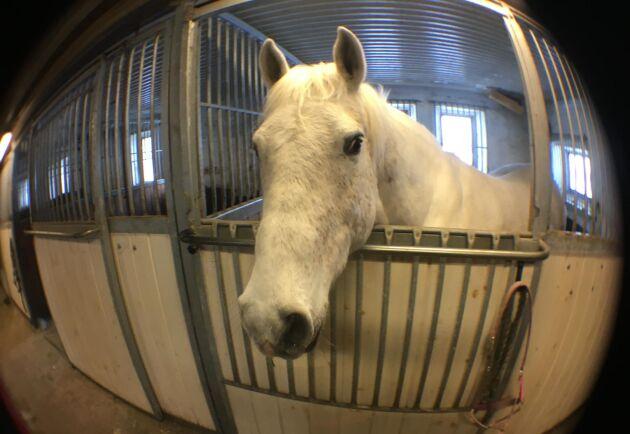 I dagens register över hästar finns ingen uppgift om var de är uppstallade.
