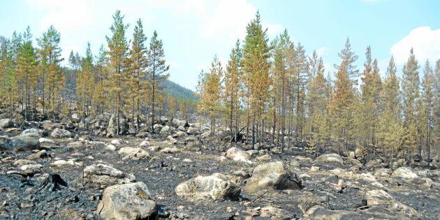 Efter bränderna: Sveaskog tar till force majeure