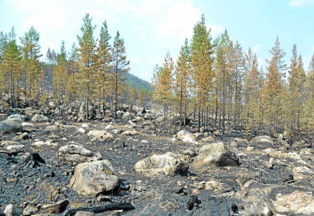 Både Sveaskog och privata skogsägare förlorade skog vid branden i Ljusdal.