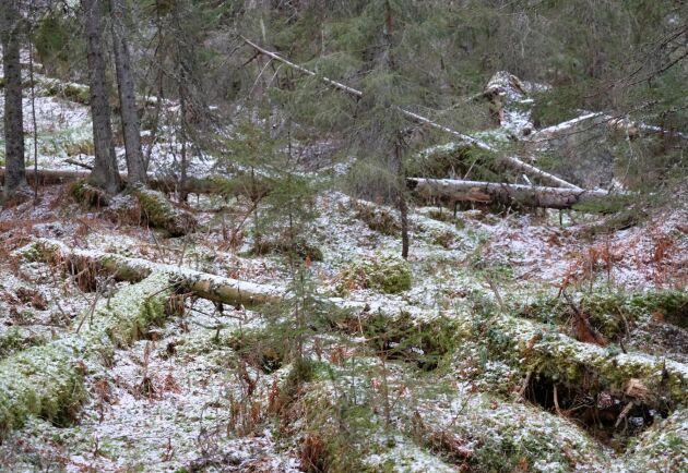 Domstolarnas uppfattningar går isär om hur nyckelbiotoper ska hanteras, och enligt Skogsutredningen saknas stöd i lagen för registrering av nyckelbiotoper.
