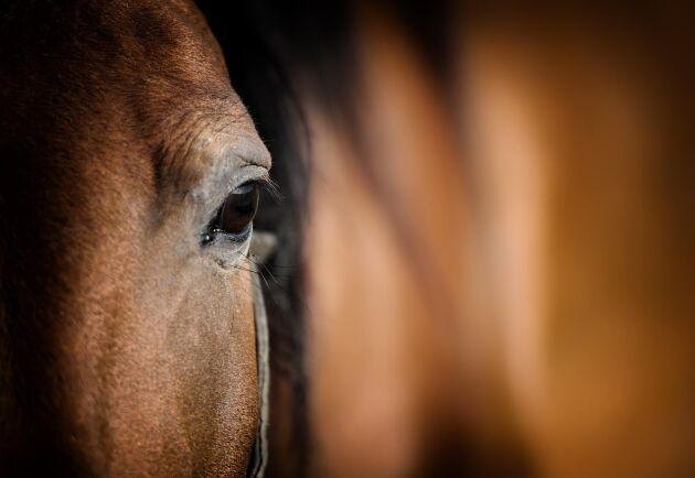 Ett nytt fall där en häst misstänks ha plågats till döds inträffade i måndags morse. Arkivbild.