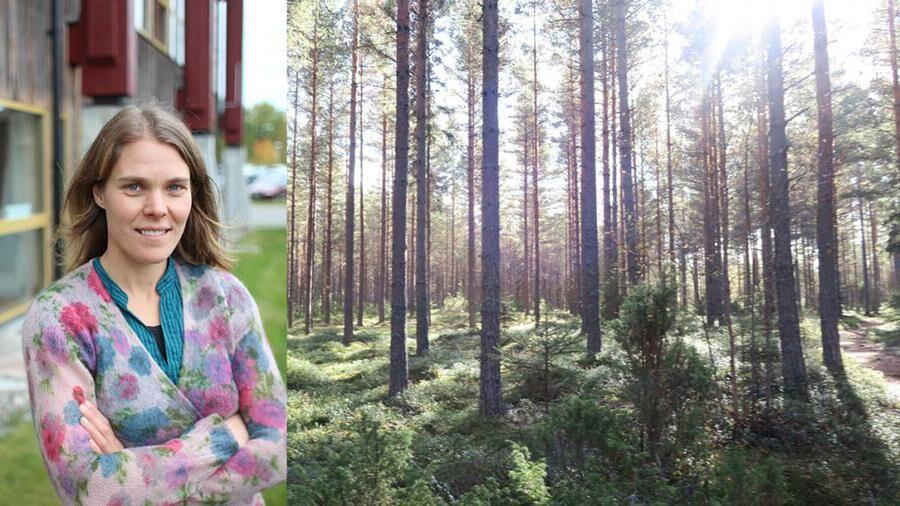 Maja Söderberg är författare och föreläsare. Fotomontage: Privat, Mostphotos