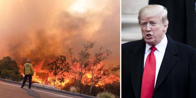 Trump skyller bränderna på skogsskötseln