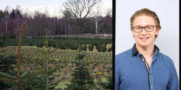 Doktorand: Sverige borde lyfta julgransproduktionen