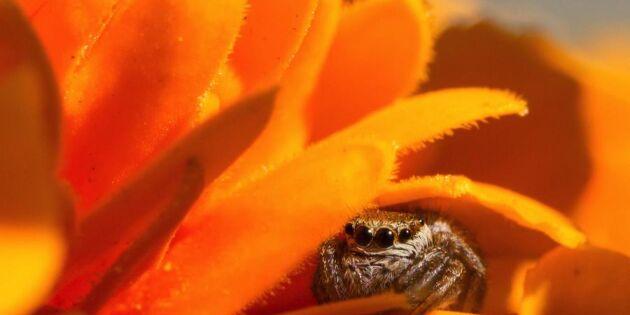 Ny forskning: Därför har du spindelskräck