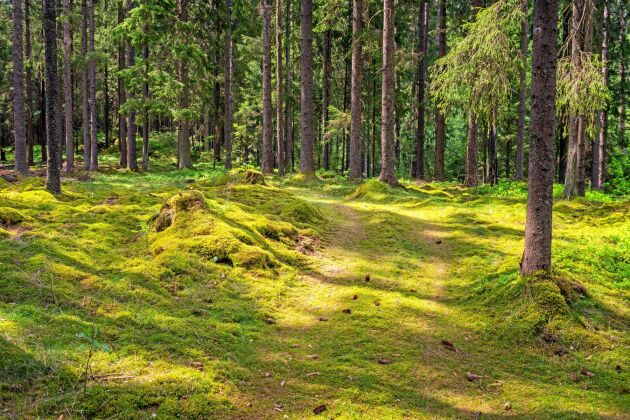 Snart ska landsbygdsminister Jennie Nilsson ge direktiv till en utredning av äganderätten. Sverigedemokraterna skriver i ett debattinlägg vilka punkter partiet vill att hon ska prioritera.