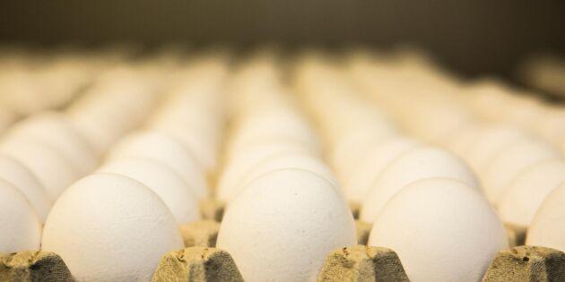 Sydsvenska ägg säljs som norrländska