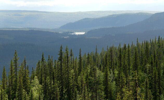 På fredag uppvaktas Näringsdepartementet av fjällnära skogsägare från Västerbotten.