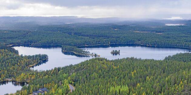 Finland sätter tuffare klimatmål med hjälp av skogen