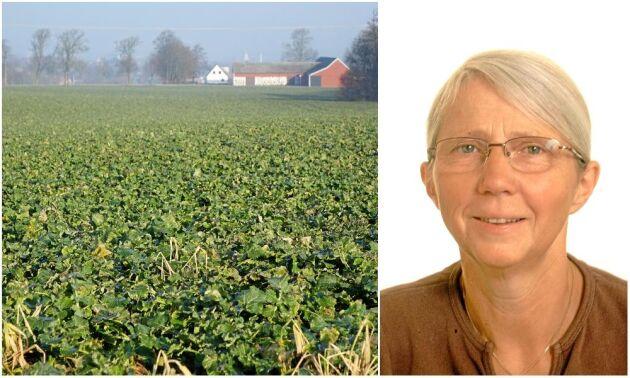 Kersti Linderholm, krönikör i ATL och agronomie doktor.