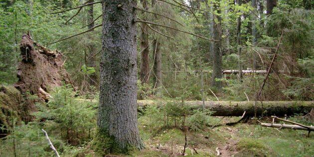 Skogsindustrins skadliga bojkott fortsätter