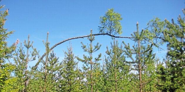 Träd växer på träd