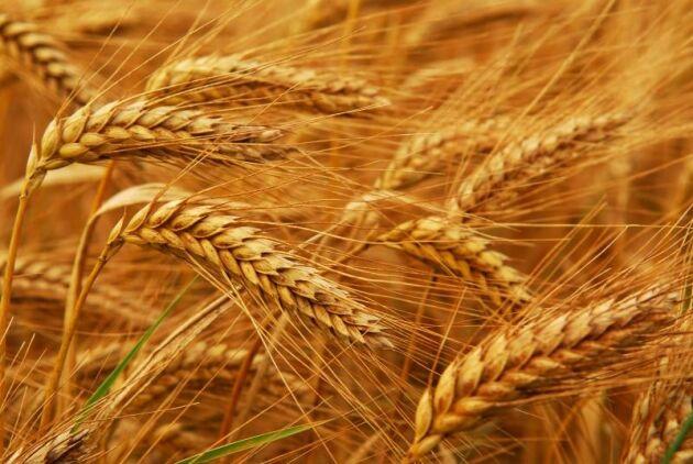 Ryska jordbrukssatsningen misslyckades.