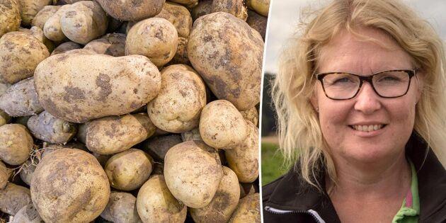 Stora mängder potatis kan klassas ner