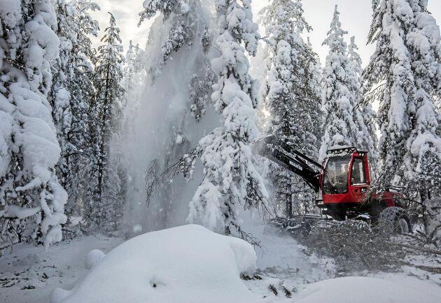 Snön ryker när träden fälls och det är inte helt lätt att se hur de snöklädda träden ser ut. Det gäller att ta bort de skadade träden i gallringen som inte kommer att ge bra timmer.