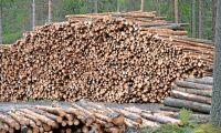 Mellanskog fördubblar resultatet