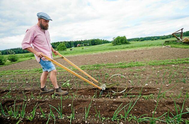 David rensar bort ogräs i grönsakslandet med en hjulhacka, som han köpte på nätet och renoverade lite.