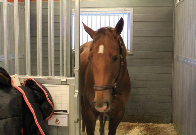 Många hästar står snart utan grovfoder. Nu vänder man blickarna mot Skåne, där skörden var bättre.