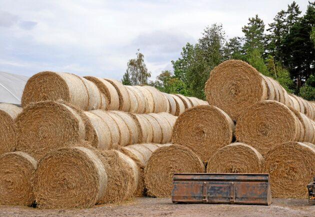 Torkan gjorde halmavkastningen sämre - samtidigt utnyttjades i princip all spannmålsareal för att även bärga halmen eller göra helsädesensilage i år, enligt Jordbruksverket.