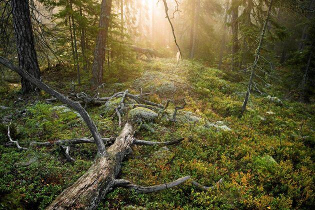 Tyresta nationalpark utanför Stockholm.