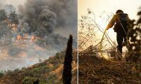 Närmare 90 000 hektar nedbrunnet i Kalifornien