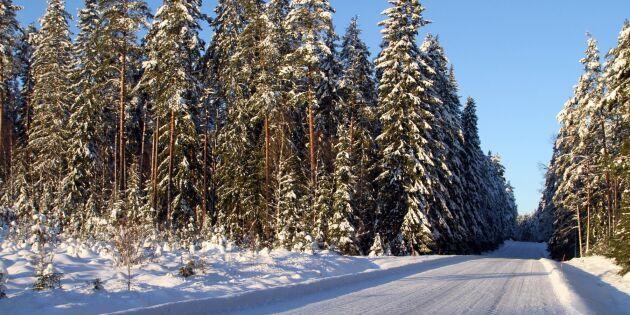 Varmare vintrar kan ge skogsproblem