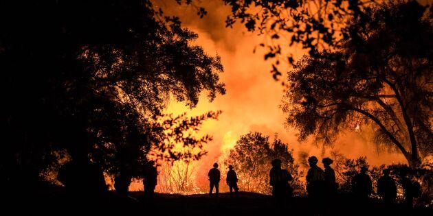Dyr nota för årets naturkatastrofer