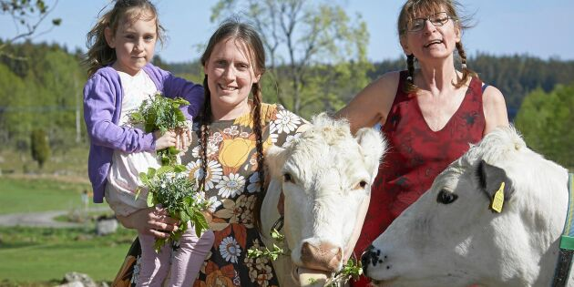 Tre generationer lever av sina älskade fjällkor i Skåne!