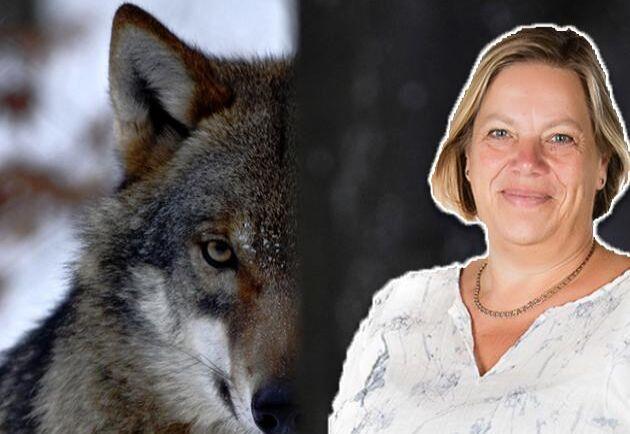 Att leva med en ständig oro för vargen kan göra den mest laglydiga människa desperat, skriver Lena Johansson.