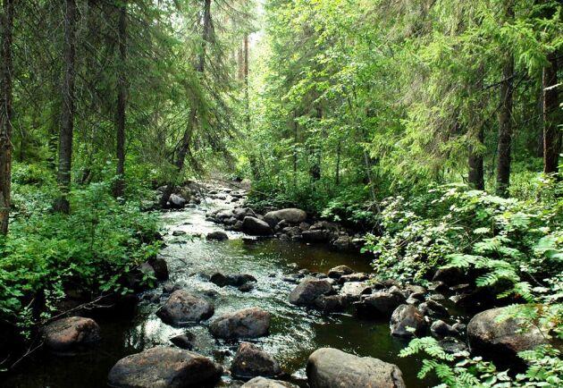 Skogens natur och rödlistade arters uppträdande är komplexa frågor, skriver Dan Rydberg, Skogsstyrelsen.