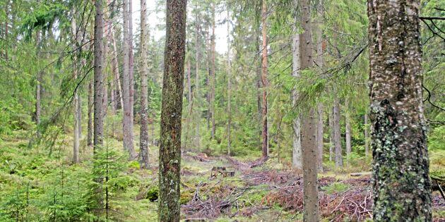 Skogsägare i stor seger mot Skatteverket
