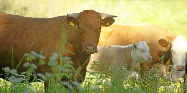 Rädda naturbetesmarkerna i nya Cap