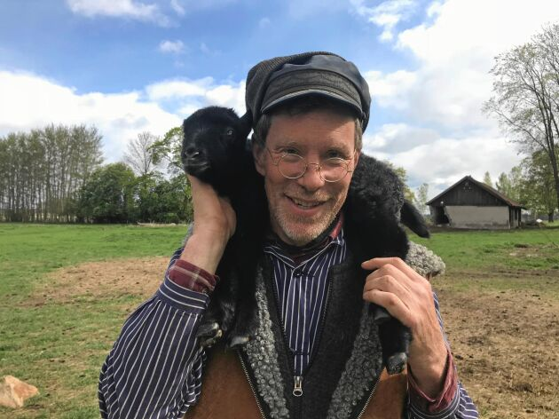 Gustav med ett av de nya gotländska lammen - fåren rymde hela tiden.