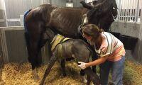 Hon miste tre hästar efter åsknedslag