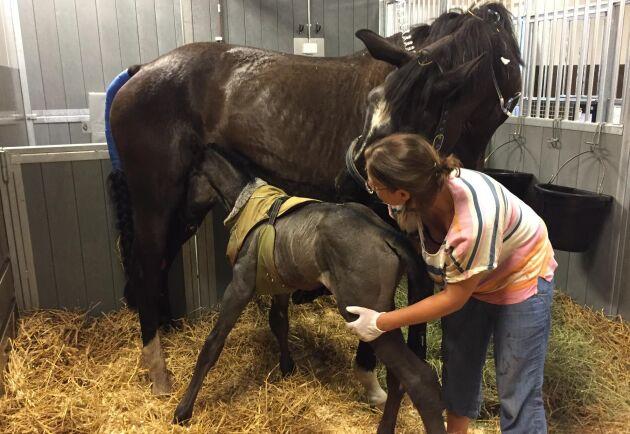 Katarina Remnemark miste tre hästar, varav stoet och nyfödda fölet som klarade sig genom en insats på Universitetsdjursjukhuset i Uppsala, och fick komma hem efter några dagars vård.