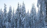 Sjunkande priser i fjällnära skog